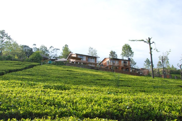 The lodges atop the tea estate